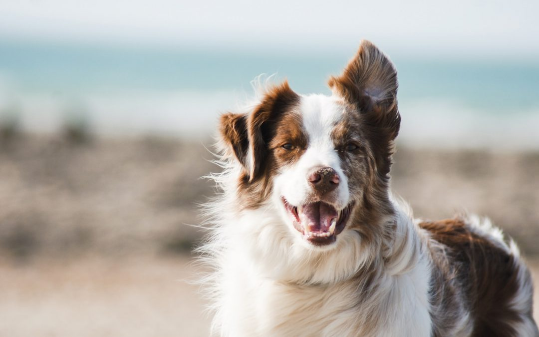 The Wonderful Benefits of Having a Pet